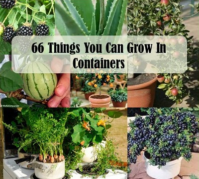 recipes projects more 66 things you can grow in containers