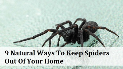 Recipes projects more 9 natural ways to keep spiders for How to keep spiders out of your house
